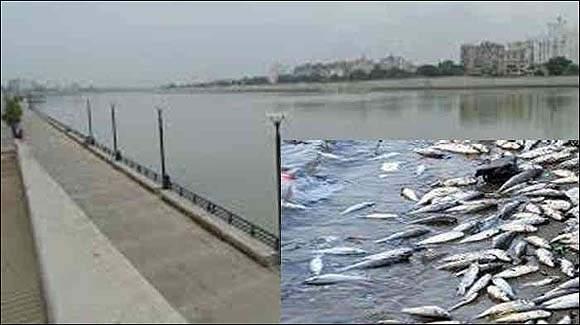અમદાવાદ: રિવરફ્રંટમાં પાણીમાં બેફામ પ્રદુષણ વધ્યું: ઓક્સીજનનું પ્રમાણ અત્યંત નીચું જતા માછલીઓના મોતથી અરેરાટી