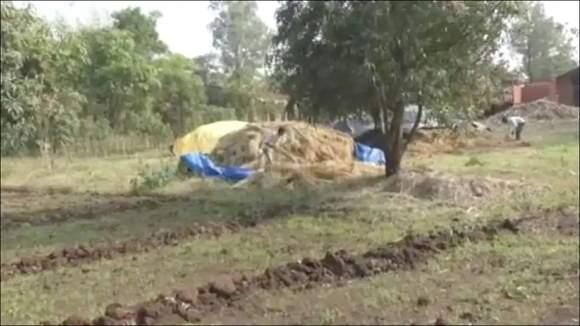 માવઠાના કારણે સુરતના ઉમરપાડા તાલુકામાં ખેડૂતોની માઠીઃ ઘાસચારો-શાકભાજી સહિતના પાકને ભારે નુકશાન