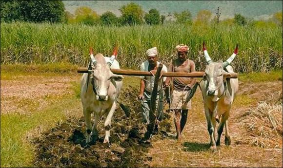 ખેડૂત ઍકતા મંચની માંગણી રાજ્ય સરકારે સ્વીકારીઃ કોરોના અને વાવાઝોડાના કારણે ધિરાણ અને મુદ્દત ધિરાણ ઍક વર્ષ માટે લંબાવાયુ