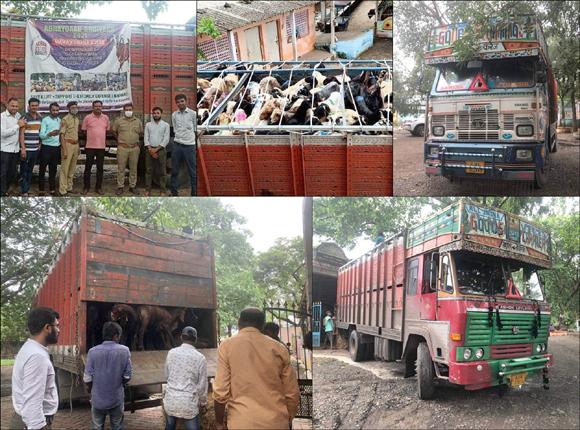 ૩૮૯ ઘેટા બકરા ભરી મુંબઈ જતી બે ટ્રક સાથે ૩ પકડાયા : પોલીસે તુરંત કાર્યવાહી કરી