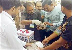 ગુજરાતવાસીઓ જાગૃત થયાઃ પતંગોત્સવની સાથે-સાથે ચલાવ્યું પક્ષીબચાવ અભિયાન