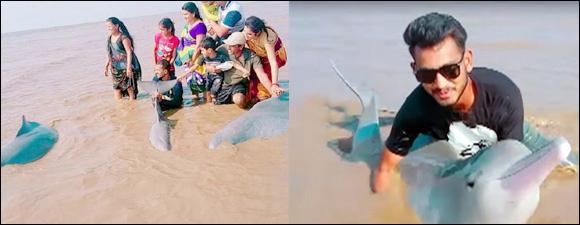 કોસંબાના દરિયાકાંઠે ત્રણ-ત્રણ ડોલ્ફીન ભૂલી પડી : સેલ્ફી લેવા લોકો ઉમટ્યા