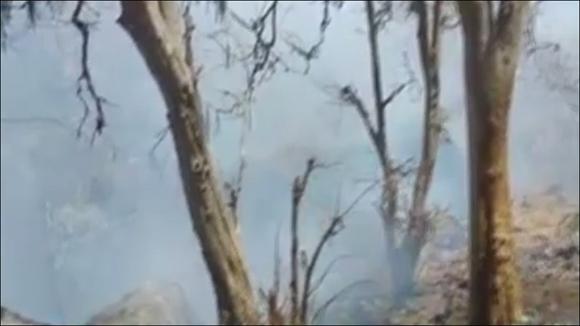 માઉન્ટ આબુના જંગલોમાં ભીષણ આગ ભભૂકી : બે કિલોમીટર સુધીની વનરાજી બળીને ખાખ