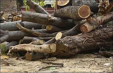 ચિલોડા-ગાંધીનગર હાઇવે પર સિક્સલેનના પ્રોજેક્ટ અંતર્ગત 4700 જેટલા વૃક્ષ કાપવામાં આવતા પર્યાવરણ પ્રેમીઓ આંદોલન પર