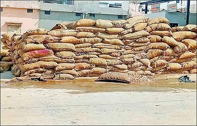 બનાસકાંઠા સહીત ઉત્તર ગુજરાતમાં અચાનક ફૂકાયેલ તેજ પવનના કારણે 400 કરોડની ટેટીના વાવેતરને નુકશાન