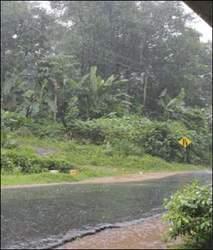 મોડીરાત્રે અમદાવાદમાં વરસાદથી પ્રહલાદનગરમાં વૃક્ષ ધરાશાયી :એકતરફ્નો રસ્તો બંધ