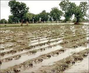 પાક વીમાનો યોગ્ય અમલ નહીં થવાના મામલે હાઇકોર્ટે કેન્દ્ર અને રાજ્ય સરકારને નોટિસ ફટકારી