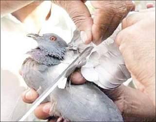 ઉતરાયણ પર્વે અનોખું અભિયાન : એક પક્ષી બચાવો અને 25 રૂપિયા લઇ જાઓ