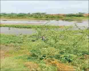 ધનસુરા તાલુકાના વડગામ નજીક નદી કિનારે પથ્થર તોડવા ગયેલ માછીમારની કેપ ફાટતા કમકમાટી ભર્યું મૃત્યુ નીપજ્યું