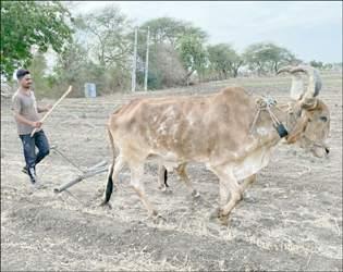 ગુજરાતમાં સરેરાશ ૯૬ થી ૧૦૪ ટકા વરસાદ થશે : આગાહી વરસી