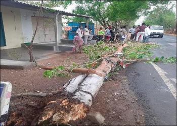 તાઉ-તે વાવાઝોડામાં બાઈક ઉપર ઝાડ પડતા દંપતી ખંડિત : મહિલાનું કરૂણમોત