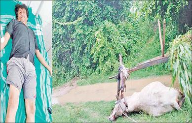 હિંમતનગર તાલુકાના ગાભોઇ નજીક બળદગાડીની હડફેટે તૂટેલ જીવંત વીજ તાર આવી જતા બળદનુ ઘટનાસ્થળેજ મોત:ખેડુત ઈજાગ્રસ્ત