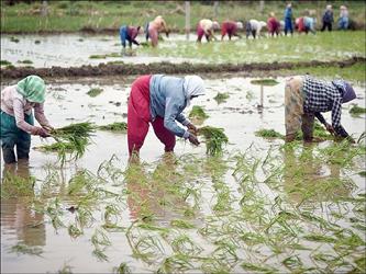 રાજ્યમાં મેઘપ્રલય બાદ ખેડૂતો બેહાલ: મુખ્યમંત્રી કિસાન  સહાય યોજના અંતર્ગત ખેડૂતોને સહાય ચૂકવવા માંગ ઉઠી