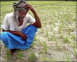 છેલ્લા ઘણા દિવસોથી દક્ષિણ ગુજરાત અને સૌરાષ્ટ્રમાં અતિ ભારે વરસાદના કારણે ખેડૂતોની સ્થિતિ કફોડીઃ બીજી તરફ રાજ્યના અમુક વિસ્તારોમાં ખેડૂતો વરસાદની ચાતક નજરે રાહ જોઇ રહ્યા છે